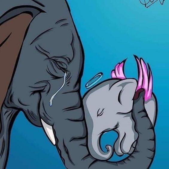 Kerala pregnant elephant news