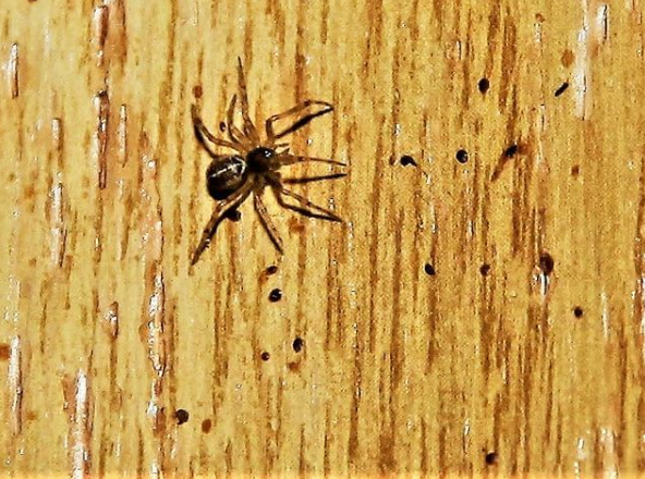 spider in home tips
